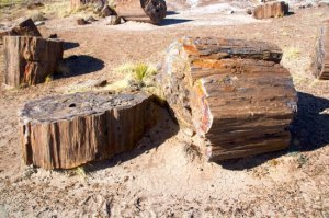 1_1206762780_petrified-forest-xxx-arizona