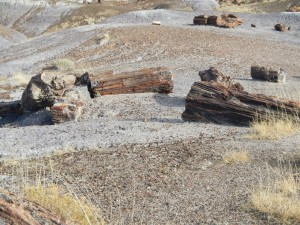 Petrified-Forest-Arizona-012-1280x960