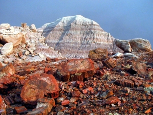 petrifiedforest